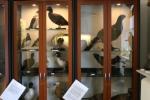 Fågelrummet